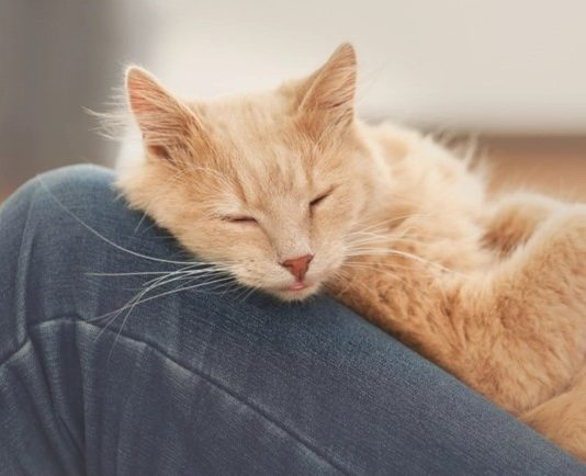 How Do You Know If Your Cat Loves You?