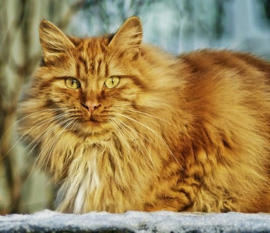 Cat Care Symptoms