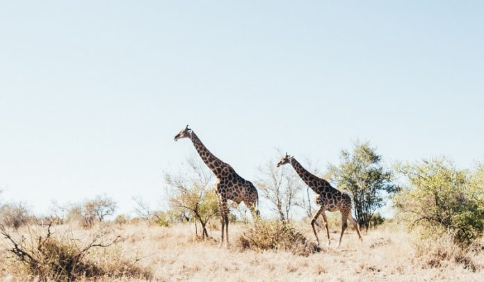 Amazing places to visit in South Africa