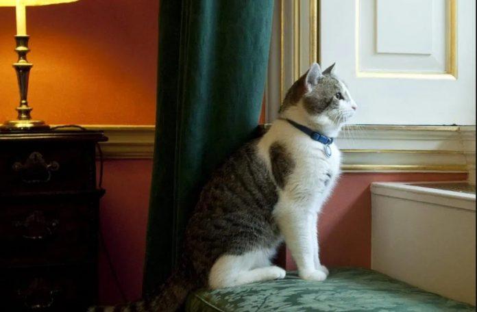 How Long Feline CoronaVirus Does Survive?