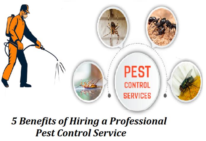 5 Benefits of Hiring a Professional Pest Control Service